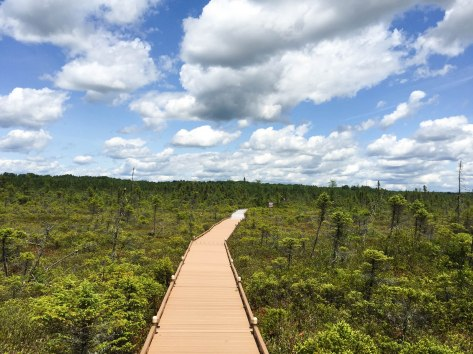maine places visit place bog walk